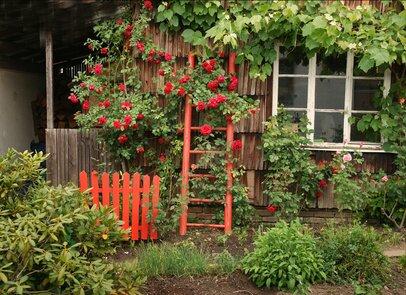 Herbstzauber mit herbstpflanzen blattsch nheiten wie for Garten im herbst anlegen