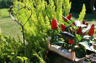 gartentipps pflanzentipps dekotipps bl tenzauber im. Black Bedroom Furniture Sets. Home Design Ideas