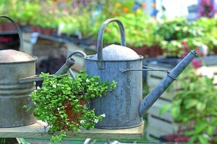Unser Gartenkalender Oder Pflanzenkalender Zeigt Ihnen , Was Im ... Gartenarbeit Dezember Was Tun