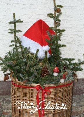 winterglanz in jedem garten und fuer eine schoene harmonische weihnachtszeit. Black Bedroom Furniture Sets. Home Design Ideas